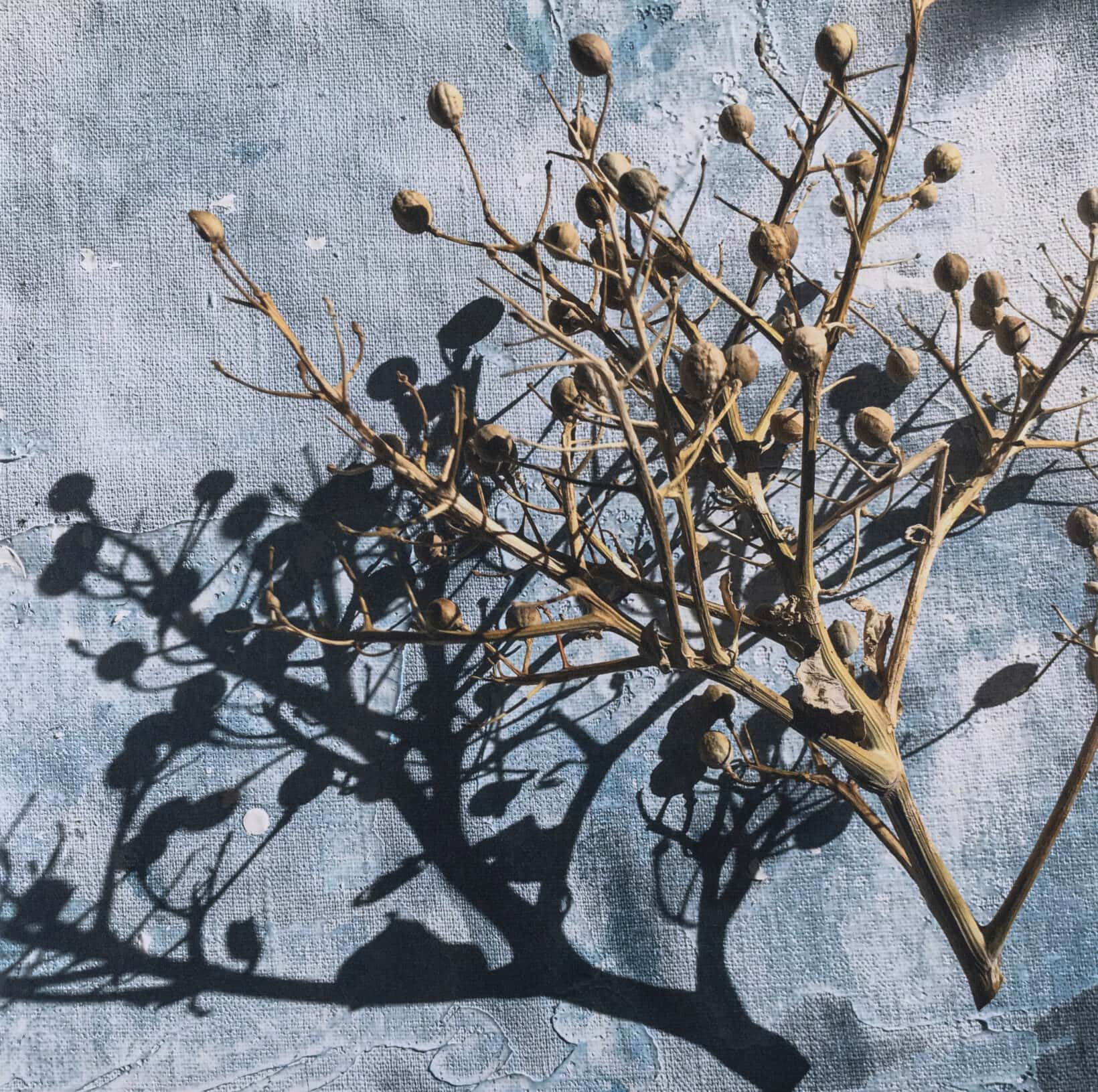 Ingunn Vestby Shadows and Twigs